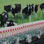 Как организовать производство кисломолочной продукции